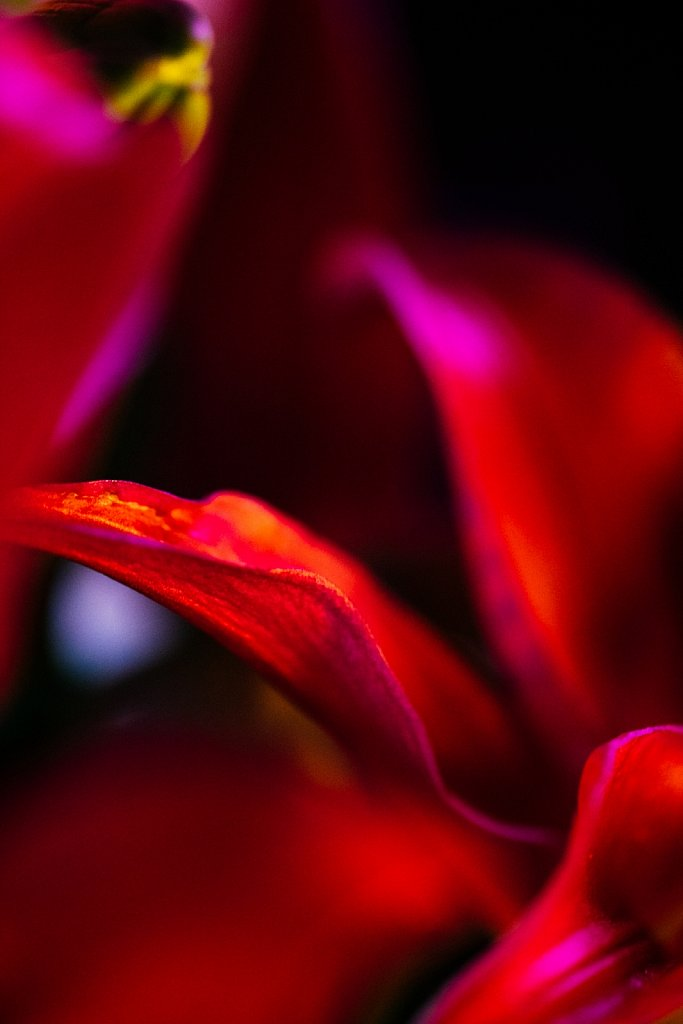 Acidflowers-Frederike-Wetzels-6721.jpg